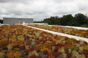 The living green roof atop WPI's East Hall