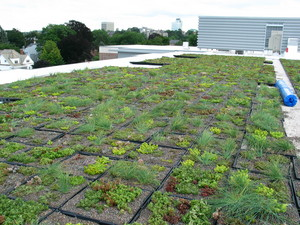 A portion of the new green roof atop WPI's newest residence hall, East Hall, can be seen, with the Worcester skyline as the backdrop. WPI's green roof is the city's first.
