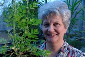 Pamela Weathers and the Artemisia annua plant