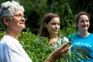 Professor Weathers , left, and students harvest Artemisia annua to study in their lab.